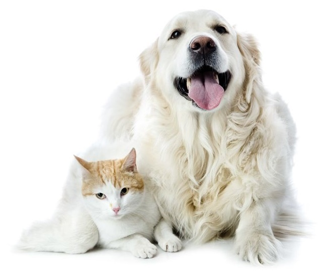White dog with cat